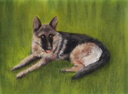 Wolf Pastels Framed Prints - German Shepherd Framed Print by Anastasiya Malakhova