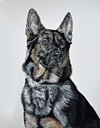 Pet Portraits Pastels - German Shepherd Bodhi by Ann Marie Chaffin
