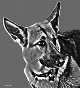Police Dog Posters - German Shepherd Poster by Cheryl Young