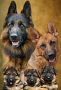 German Shepherd Family Collage Print by Sandy Keeton