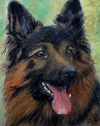 Gea Scheltinga - German Shepherd
