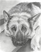 Head Pastels Posters - German Shepherd Poster by Heather Gessell