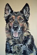 Pet Portraits Pastels - German Shepherd Jim by Ann Marie Chaffin