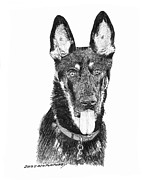 Tan Drawings Posters - German Shepherd Kimo Poster by Jack Pumphrey
