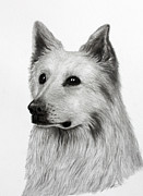 Dogs Drawings - German Shepherd by Lorraine Foster