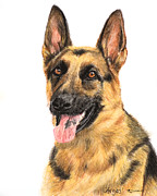 Police Pastels Framed Prints - German Shepherd Painting Portrait  Framed Print by Kate Sumners