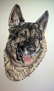 Police Pastels Metal Prints - German Shepherd Rudi Metal Print by Ann Marie Chaffin