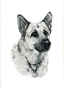 Tag Drawings Framed Prints - German Shepherd Framed Print by Terri Mills