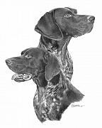 Montage Drawings Posters - German Short-hair Pointer Poster by Joe Olivares