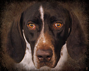 Shorthaired Prints - German Shorthaired Pointer Print by Jai Johnson