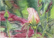 Bud Pastels Framed Prints - Gerrys Rose Bud in Pastel Framed Print by Judith Rice