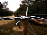 Barbed Wire Fences Prints - Get the Point Print by Jerry Stolarski