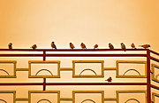 Flocks Of Birds Posters - Get together Poster by Saurabh and Geetanjali Nande