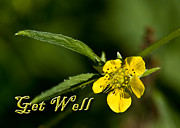 Jeanette K - Get Well Buttercup