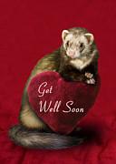 Jeanette K - Get Well Soon Ferret