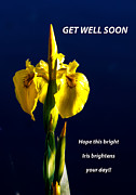 Monocot Prints - Get Well Soon Print by Robert Bales