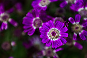 Flower Design Photos - Getting Noticed by Syed Aqueel