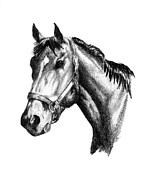 Thoroughbred Drawings - Ghazibella Thoroughbred Racehorse Filly by J M L Patty