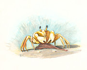 St George Mixed Media Framed Prints - Ghost Crab Framed Print by Leanne Blackwell
