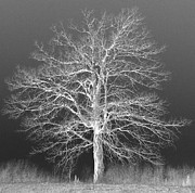 Mike Cartwright - Ghost Oak
