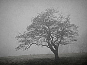 Ghost Tree Prints - Ghost On The Hill Print by Odd Jeppesen