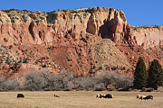 John Greco - Ghost Ranch