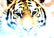 Nick Gustafson Prints - Ghost Tiger Print by Nick Gustafson