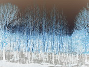 Inverted Color Prints - Ghost Trees Print by A K Dayton