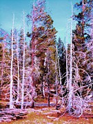 Ann Johndro-collins Framed Prints - Ghost Trees of the Yellowstone Framed Print by Ann Johndro-Collins