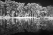 Nature Center Pond Prints - Ghostly Pond Print by Robert Nelms