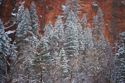West Fork Oak Creek Canyon Posters - Ghosts of Winter Poster by Peter Coskun