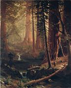 Famous Artists - Giant Redwood Trees of California by Albert Bierstadt