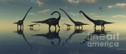 Roaming Posters - Giant Sauropod Dinosaurs Grazing Poster by Mark Stevenson