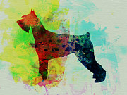 Pets Art Posters - Giant Schnauzer Watercolor Poster by Irina  March