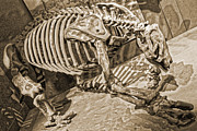 Gregory Dyer - Giant Sloth Bones at the Smithsonian