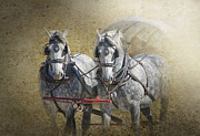 Gray Horses Digital Art Framed Prints - Giddyup Framed Print by Betty LaRue