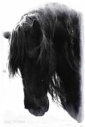 Friesian Prints - Gift of Knowing Print by Royal Grove Fine Art
