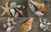 Gifts Originals - Gifts from the Sea - Seashells by Dora Sofia Caputo