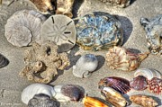 Sea Shells Photos - Gifts of the Tides by Benanne Stiens