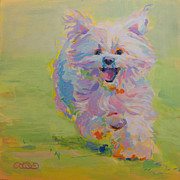 White Maltese Framed Prints - Gigi Framed Print by Kimberly Santini