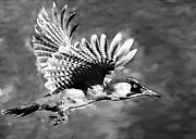 Bob Johnston - Gila Woodpecker Sedona...