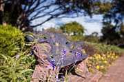 Gilcrease Metal Prints - Gilcrease House Garden Flower Metal Print by Tamyra Ayles