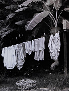 Banana Tree Photos - Ginas Clothes Line by Christy Usilton