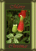 Red Ginger Posters - Ginger Lily Pine Cone Christmas Poster by Carolyn Marshall