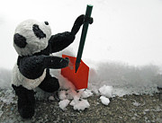 Travelling Panda Prints - Ginny The Baby Panda In Winter #02 Print by Ausra Paulauskaite