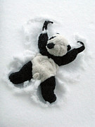 Travelling Panda Prints - Ginny The Baby Panda Making A Snow Angel Print by Ausra Paulauskaite