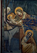 Christ Child Posters - Giotto, Stories Of Christ Nativity Poster by Everett