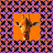 Calming Posters - Giraffe Abstract Window 20130205m118 Poster by Wingsdomain Art and Photography