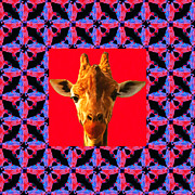 Menagerie Posters - Giraffe Abstract Window 20130205m150 Poster by Wingsdomain Art and Photography