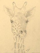 Anne Buffington - Giraffe